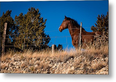 Metal Print featuring the photograph King Of The Hill by Allen Biedrzycki