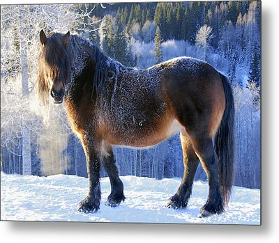King Of The Valley Metal Print by Annicawesterlund