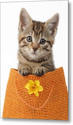 Kitten In Orange Bag Metal Print
