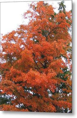 Lady Autumn - Tree Metal Print by Margaret McDermott