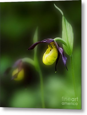 Wildflowers Lady Slipper Wild Orchid Metal Print by Bob Christopher