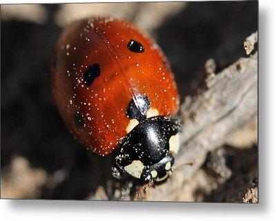 Ladybug Metal Print by Lorri Crossno