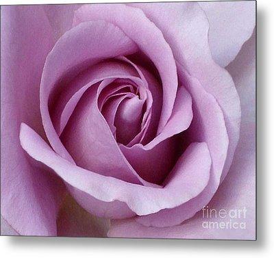 Lavender Rose Blossom 1 Metal Print by Paul Clinkunbroomer