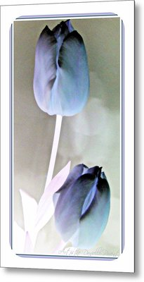 Lavender Tulips Metal Print by Danielle  Parent