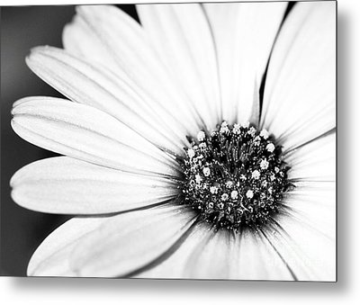Lazy Daisy In Black And White Metal Print by Sabrina L Ryan