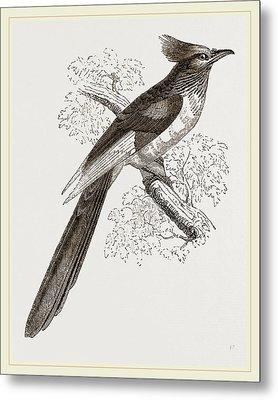 Le Vaillants Cuckoo Metal Print by Litz Collection
