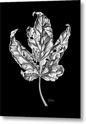 Leaf Metal Print by David Fedan