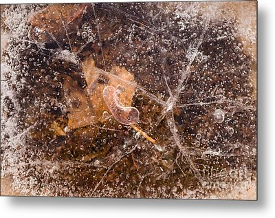 Leaf In Ice Metal Print by Anne Gilbert