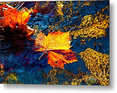 Leaf In The Stream Metal Print by Jay Nodianos