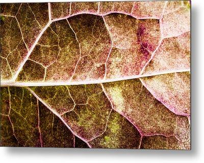 Leaf Lines Metal Print by Christine Smart