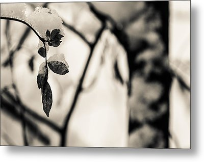Leaves And Snow Metal Print by Andreas Levi