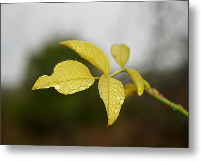 Leaves Metal Print by Cora Brum