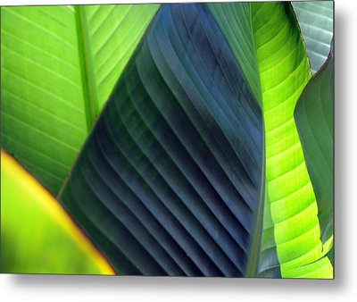 Metal Print featuring the photograph Leaves - Green by Haleh Mahbod
