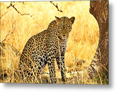 Leopard Metal Print by Kongsak Sumano