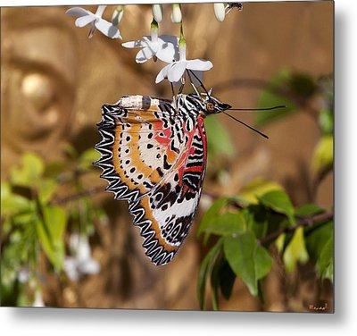 Leopard Lacewing Butterfly Dthu619 Metal Print by Gerry Gantt