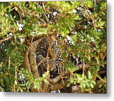Leopard On Tree Metal Print by Kongsak Sumano