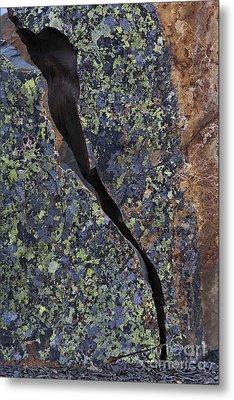 Lichen On Granite Metal Print by Heiko Koehrer-Wagner