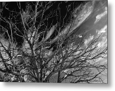 Metal Print featuring the photograph Lifes End by Eric Rundle
