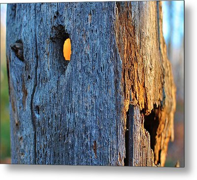 Metal Print featuring the photograph Light From Within by Paul Noble