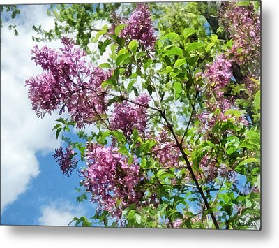 Lilacs And Clouds Metal Print by Susan Savad