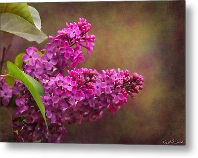 Lilacs Metal Print by David Simons