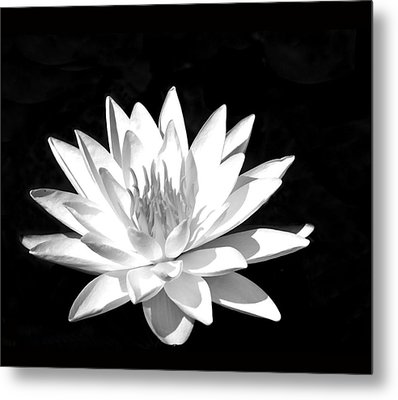 Lily#2 Metal Print by Joe Bledsoe