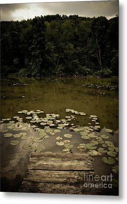 Lilypads At The Dock Metal Print by Amy Cicconi