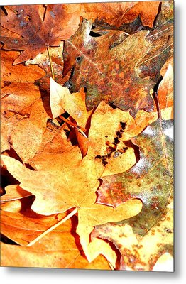Lines Of Fall Metal Print