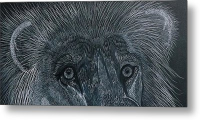 Lion Eyes  African King Detail Metal Print