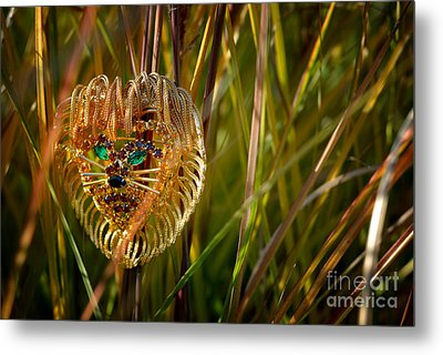 Lion In The Grass Metal Print by Amy Cicconi