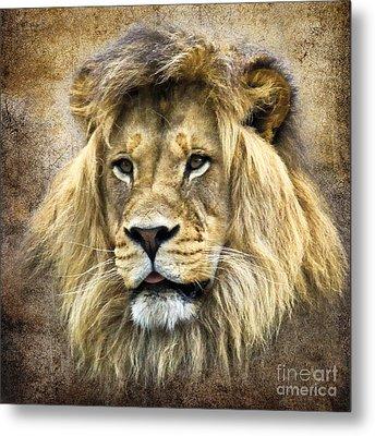Lion King Metal Print by Steve McKinzie