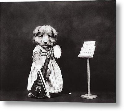 Little Fiddler Metal Print by Aged Pixel