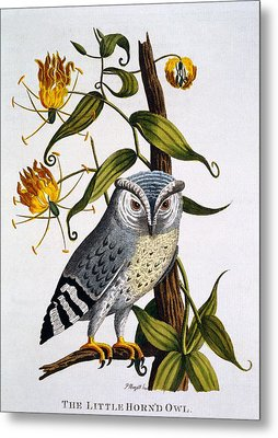 Little Horned Owl, From Indian Zoology Metal Print