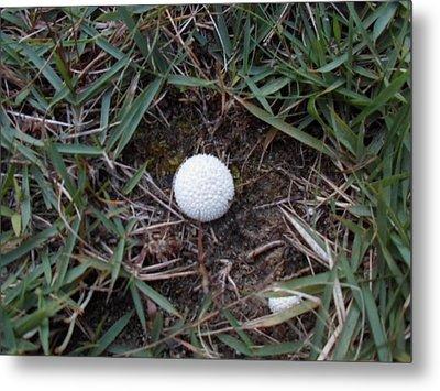 Little White Mushroom Metal Print by Jenna Mengersen