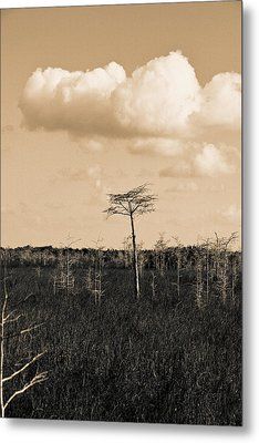Metal Print featuring the photograph lone cypress III by Gary Dean Mercer Clark