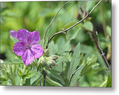 Lone Geranium In Yellowstone Metal Print by Bruce Gourley