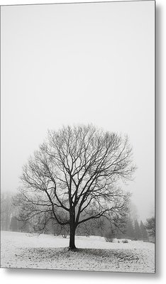 Metal Print featuring the photograph Lone Tree In Snow by Ed Cilley