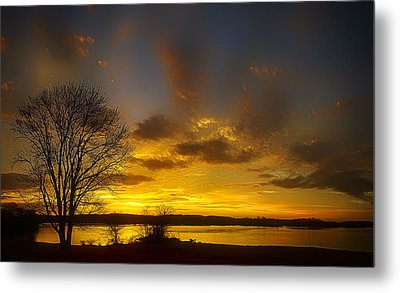 Lone Tree Sunrise Metal Print by Dan Holland