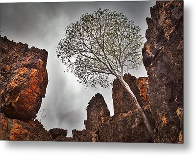 Lonely Gum Tree Metal Print by Dirk Ercken