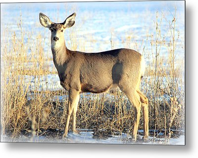 Metal Print featuring the photograph Lonesome Doe Sunset by Barbara Chichester