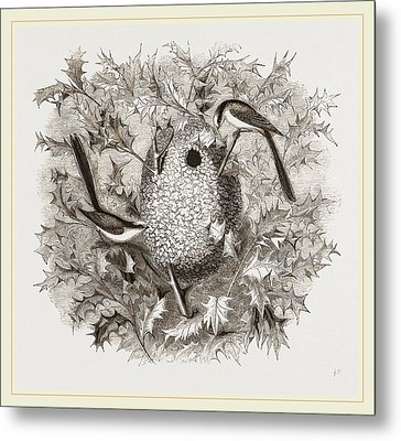 Long-tailed Titmice And Nest Metal Print by Litz Collection