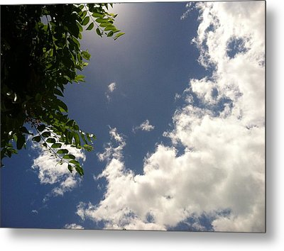 Metal Print featuring the photograph Looking Up by Alohi Fujimoto