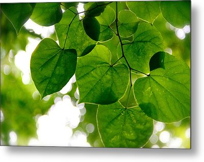 Looking Up Metal Print by Tracy Male