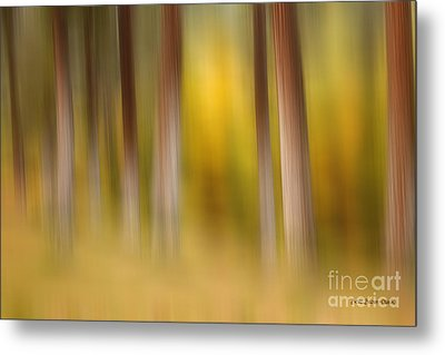 Lost In Autumn Metal Print by Beve Brown-Clark Photography