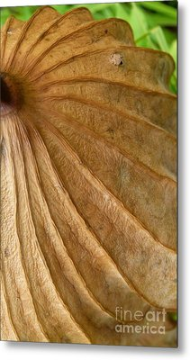 Metal Print featuring the photograph Lotus Leaf by Jane Ford