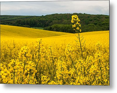 Lovely Hills Metal Print by Davorin Mance