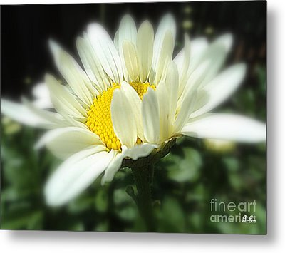 Metal Print featuring the photograph Loves Me by Geri Glavis