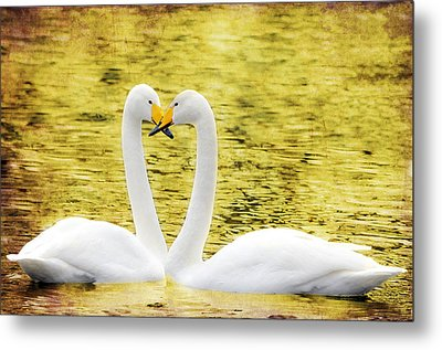 Loving Swans Metal Print by Tommytechno Sweden
