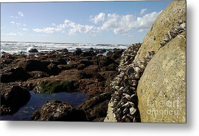 Low Tide Cabrillo National Monument Metal Print