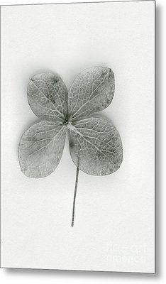 Luck Metal Print by Margie Hurwich